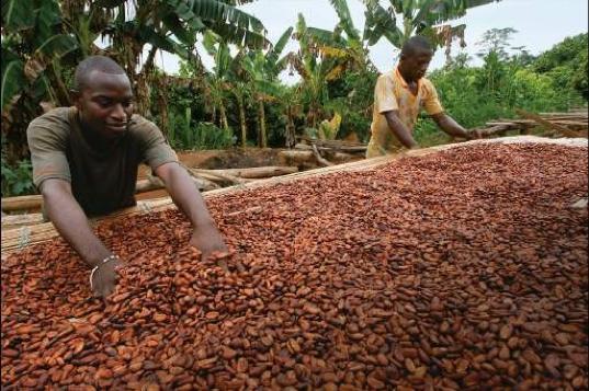 leonidas cocoa horizons